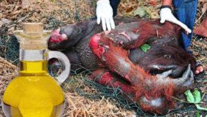 orangutan požár3